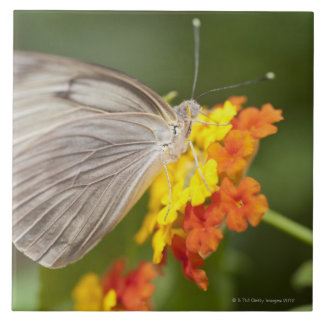 Simple butterfly on yellow and red flowers ceramic tile