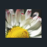 """Simple Daisy Canvas Print<br><div class=""""desc"""">Delightfully simple Daisy flower,  sure to brighten up any room all year round.</div>"""