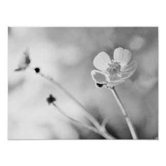 Simple Flower Black and White Poster