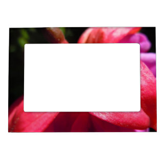 Simple Fuschia Magnetic Picture Frame