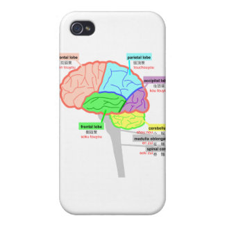 simple parts of the brain japanese iPhone 4/4S case