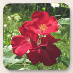 "Simple Red Roses Coaster<br><div class=""desc"">Simple Red Roses,  PhotOriginal.  PhotOriginals are photos from my beautiful Bear River northern Minnesota secret country cottage gardens.  Geometric patterns are all derived from PhotOriginals.  They are unique designs,  not sold through mass markets.  They are named,  labeled and available individually and in sets.  https://www.facebook.com/GHSNorthernGardens/ and http://www.ghsnortherngardens.com/ and https://www.zazzle.com/photoriginalsbyghs/products</div>"