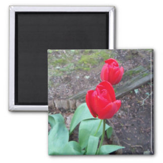 Simple Red Tulip Square Magnet
