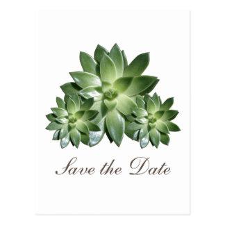 Simple Succulent Save the Date Invite Postcard