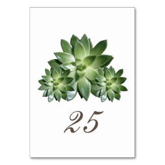Simple Succulent Wedding Table Card