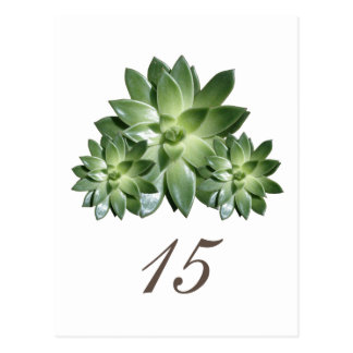 Simple Succulent Wedding Table Number Postcard