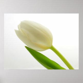 Simple Tulip Poster