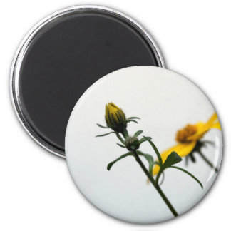 Simple Yellow Flowers Round Magnet