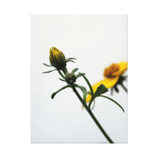 Simplicity - Floral Photography - Canvas