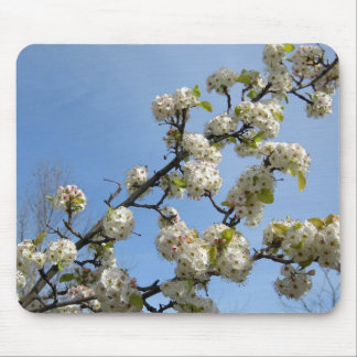 Simplicity of Spring Mouse Pads
