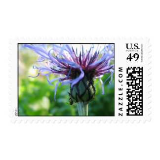 Simplicity Postage Stamps