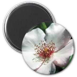 Simplicity, S Cyr 2 Inch Round Magnet