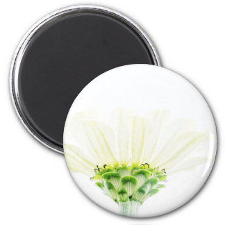 Simplistic White Zinnia Magnet