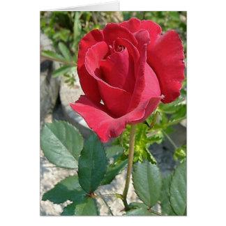 Simply a Rose Card