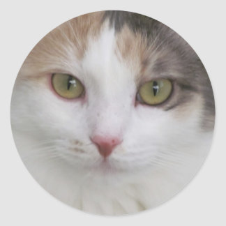 Simply Beautiful! Summer, The Cat Classic Round Sticker