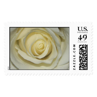Simply Cream Rose Postage Stamp