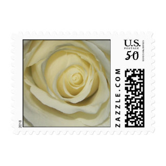Simply Cream Rose -Small Size - Customized Postage