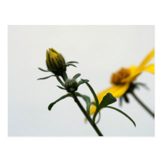 Simply... Floral Photography Postcard