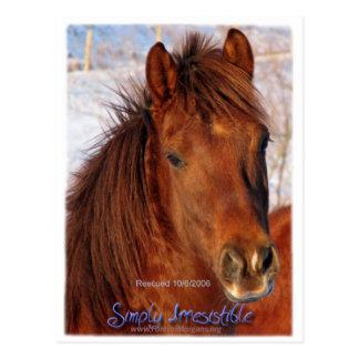 Simply Irresistible Rescue Horse Burrito Postcard