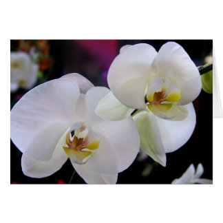 Simply orchids card