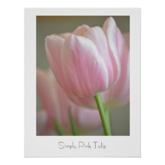 Simply Pink Tulip Posters