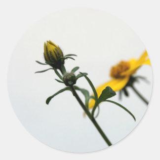Simply Yellow flower modern Stcker Classic Round Sticker