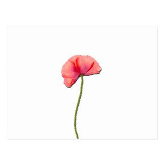 Sing red poppy flower minimalist simplicity postcard