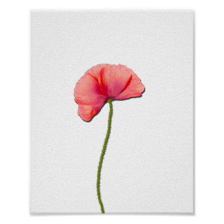 Sing red poppy flower minimalist simplicity poster