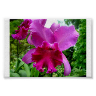 Singapore Orchid 2 Poster