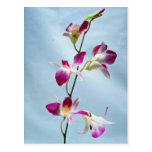 Singapore orchid flowers postcard
