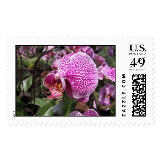 Singapore Orchid Stamp