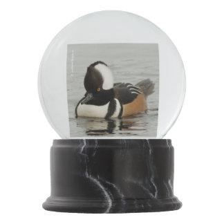 Singer in the Making: Hooded Merganser Snow Globe