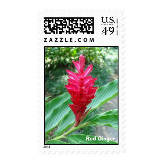 Singflower, Red Ginger Stamps