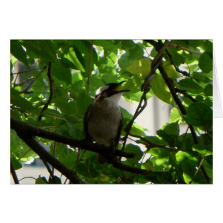 Singing Bird/ Chinese Bulbul Blank Note Card Greeting Card