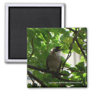 Singing Bird/ Chinese Bulbul Gift Magnet