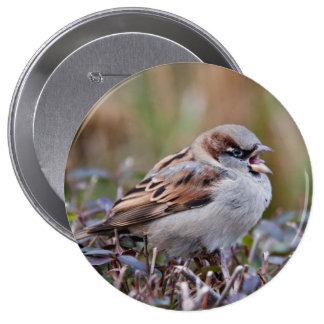 Singing bird pin