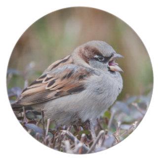 Singing bird dinner plate