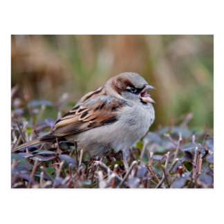 Singing bird postcard