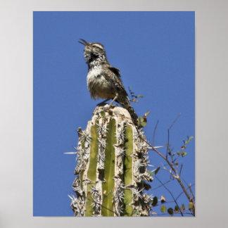 Singing Cactus Wren Poster