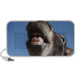 Singing Donkey speaker doodle