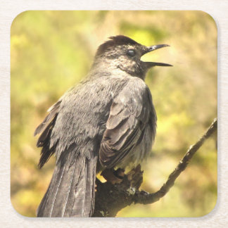 Singing Gray Catbird Coasters
