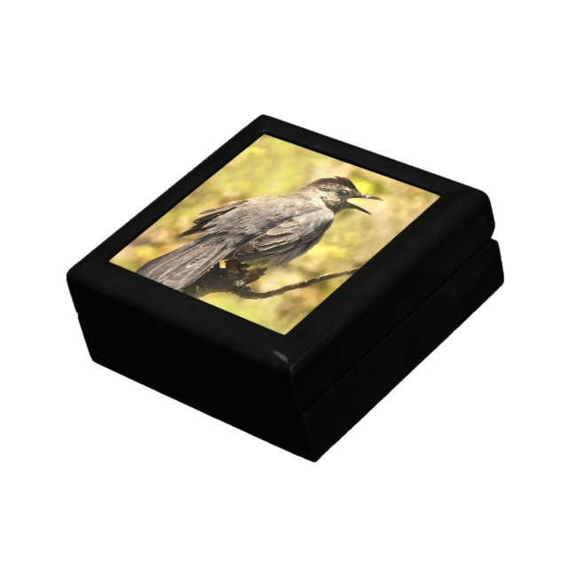 Singing Gray Catbird Keepsake Box