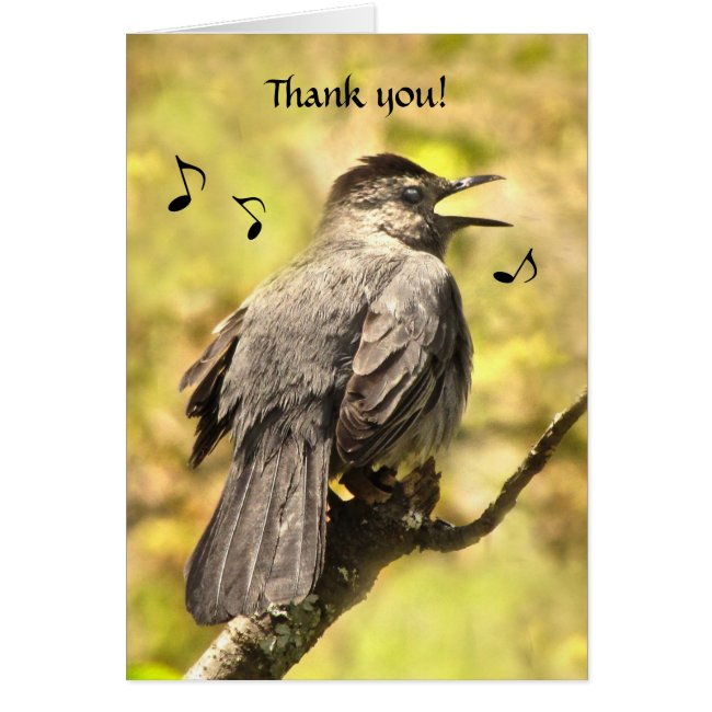 Singing Gray Catbird Thank You Card