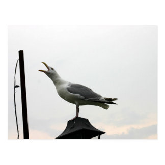 Singing Gull of CT Postcard