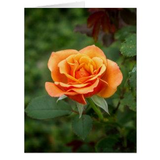 Singing in the Rain Rose Card