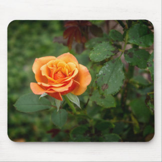 Singing in the Rain Rose Mouse Pad