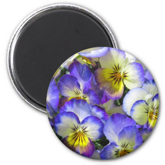 Singing Pansies - Magnet
