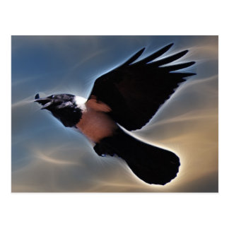 Singing raven in flight postcard