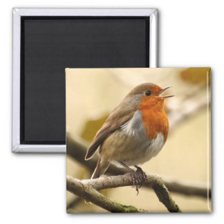 Singing Robin 2 Inch Square Magnet