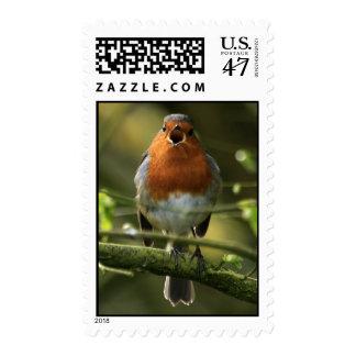 Singing Robin Postage